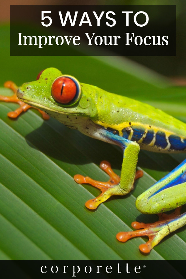 "pin - text over images of a frog that says ""5 ways to improve your focus"""